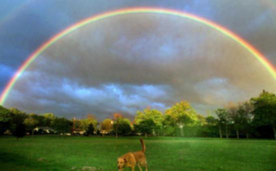 Perch l 39 arcobaleno ha quei colori curiosit e perch - Arcobaleno a colori e stampa ...