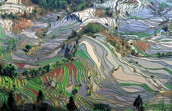 terrazze di riso di Yuanyang Cina