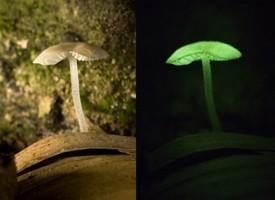 Uno spettacolo della natura: i funghi fluorescenti