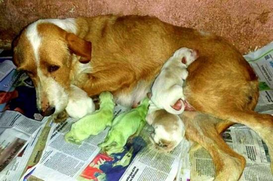 spagna nati cani verdi