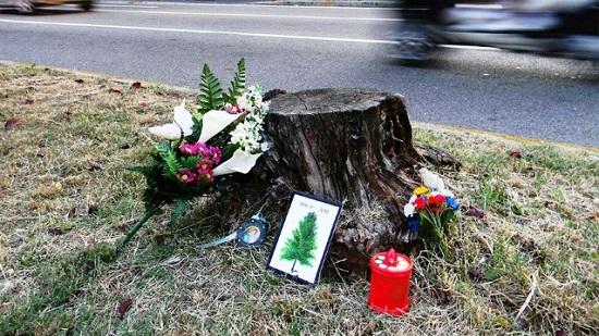 street art albero morto