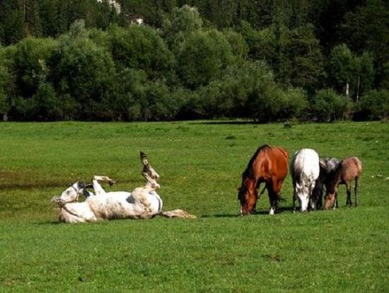 campa cavallo che erba cresce