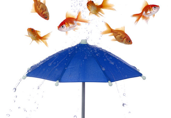 pioggia pesci