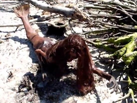 ritrovata sirena spiaggiata