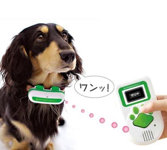 traduttore-cani