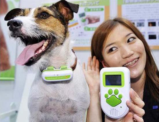 traduttore-per-cani