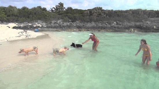 isola dei maialini