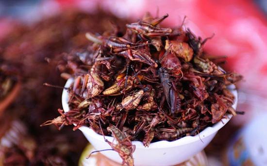grasswhoppers con grilli