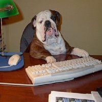 I 10 cani meno intelligenti del mondo e più difficili da addestrare