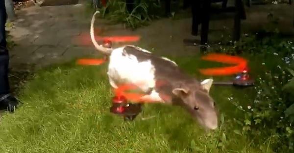 topolino morto ratcopt elicottero