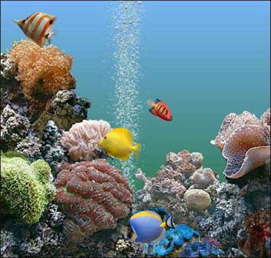Perch i pesci saltano fuori dall 39 acquario curiosit e for Pesci per acquario piccolo
