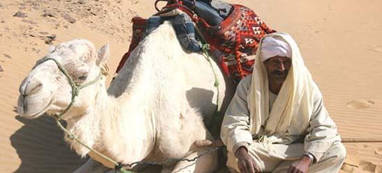 carne di cammello