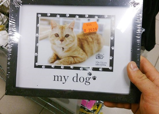 dog gatto fail packaging