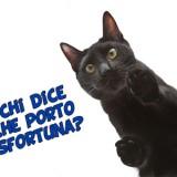 Perché si dice che il gatto nero porti sfortuna?