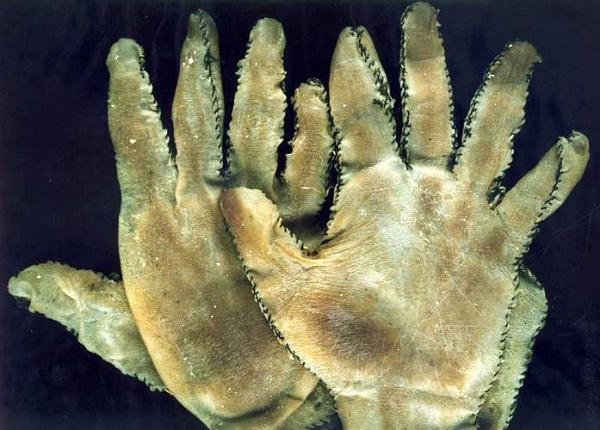 guanti in pelle umana