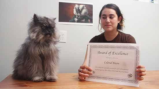 il gatto con il pelo piu lungo del mondo