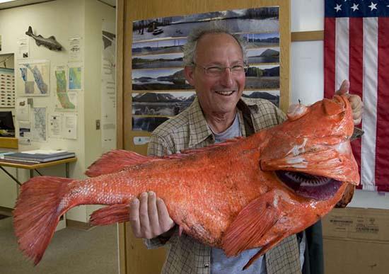 pesce vecchio 200 anni