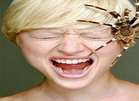 Donna vive per un mese con un ragno nell'orecchio