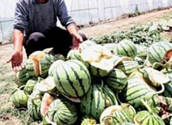Cina il curioso caso delle angurie esplosive