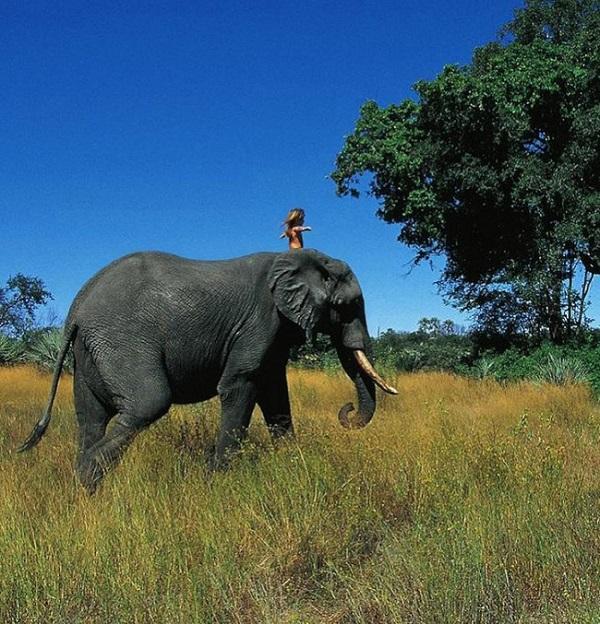 bambina gioca con elefante