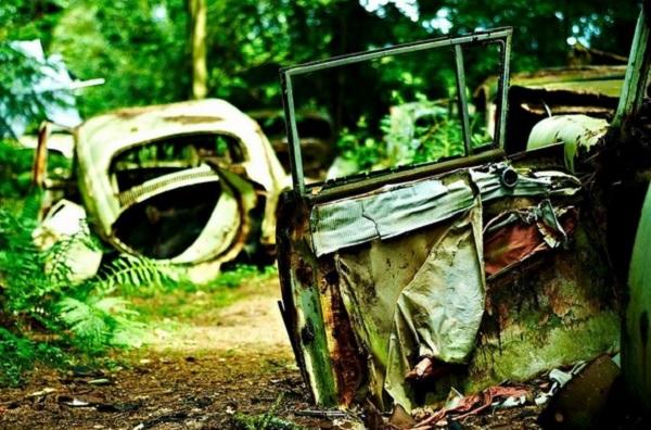 automobili abbandonate foresta belgio