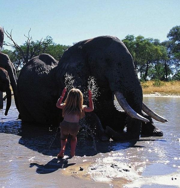elefante africa savana