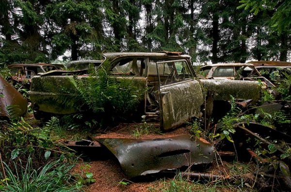 auto cimitero belgio foresta