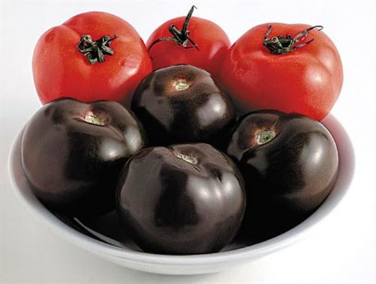 indigo rose pomodoro