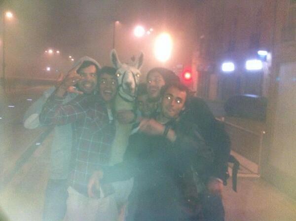 ragazzi ubriachi rubano lama