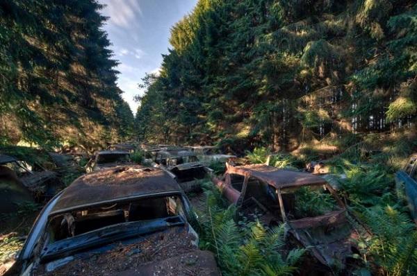 automobili abbandonate foresta