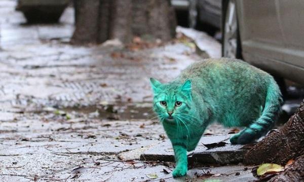 gatto verde in bulgaria