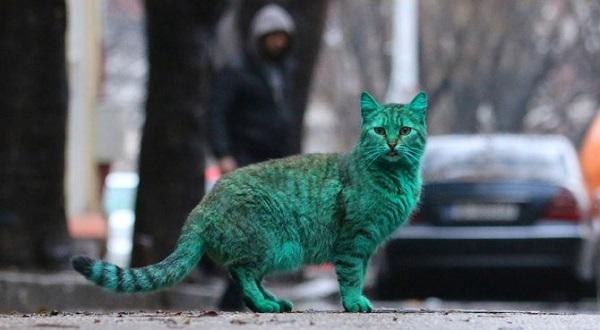vernice verde gatto colorato