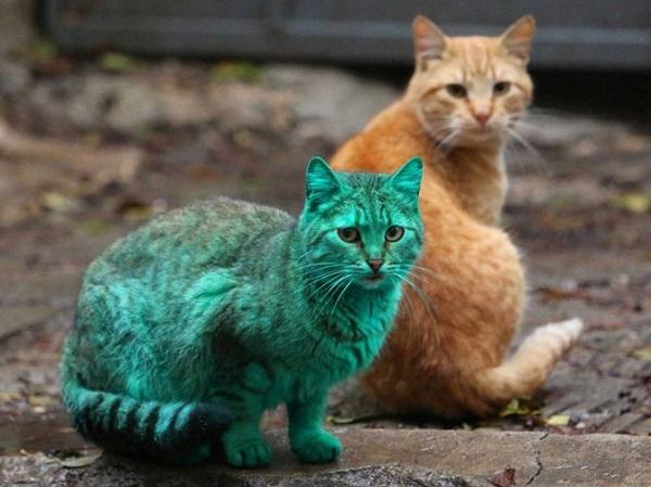 gatto colorato di verde
