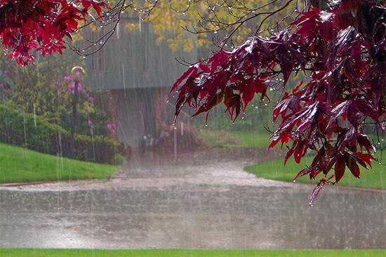pioggia e odori
