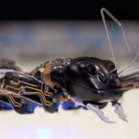 Formiche robot come operai del futuro?