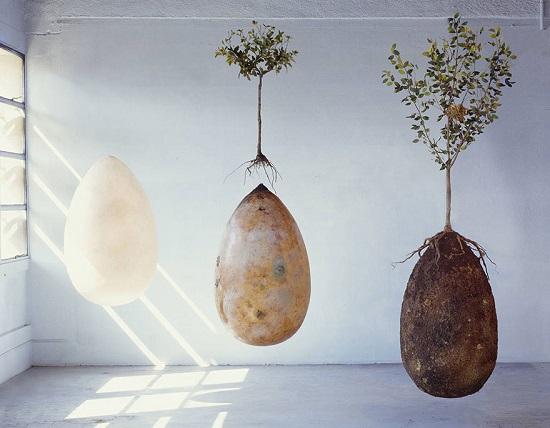 gusci organici biodegradabili