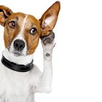 Curiosità e leggende sul mondo dei cani