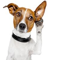Scienza e natura curiosit e perch - Perche i cani scavano sul divano ...