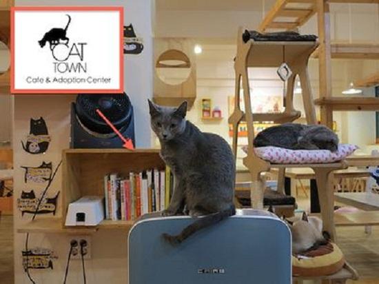 cat town cafe di oakland