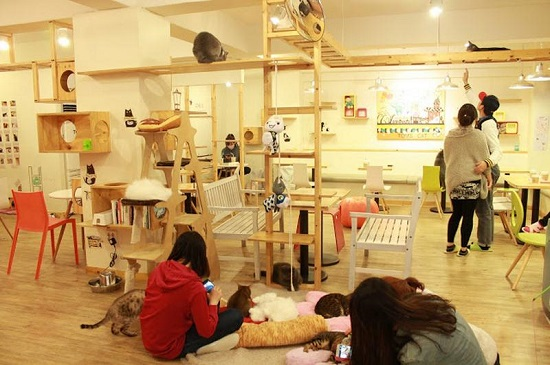 seoul tom s cat cafe