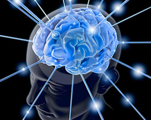 cervello sapienza
