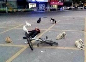 Donna muore e 8 cani randagi vegliano tutta la notte sul corpo abbandonato
