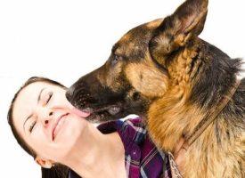 Il cane la lecca e le trasmette la setticemia: donna rischia di morire