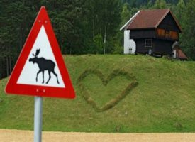 In Norvegia un fulmine uccide 323 renne selvatiche