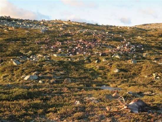 strage renne norvegia