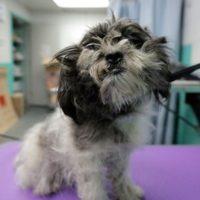 Tosa gratis i cani randagi più anziani e cambia le loro vite