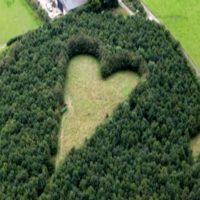 Uomo pianta 6000 alberi in onore della moglie defunta e 17 anni dopo il loro segreto viene rivelato