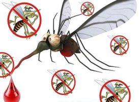 7 motivi per cui si viene punti dalla zanzare molto di più di chiunque altro