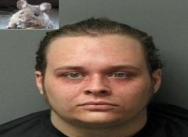 La polizia arresta un uomo: gli trovano un topo nell'ano