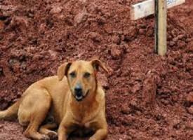 Veglia sulla tomba della padrona, cane commuove il Brasile